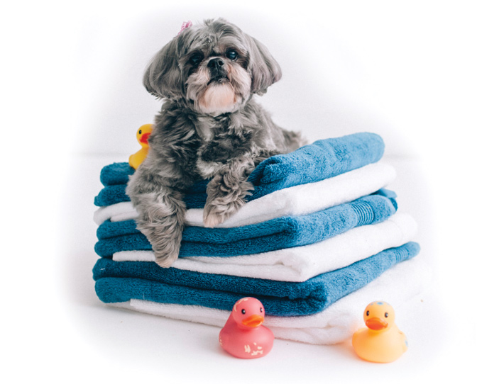 Pup on towels.